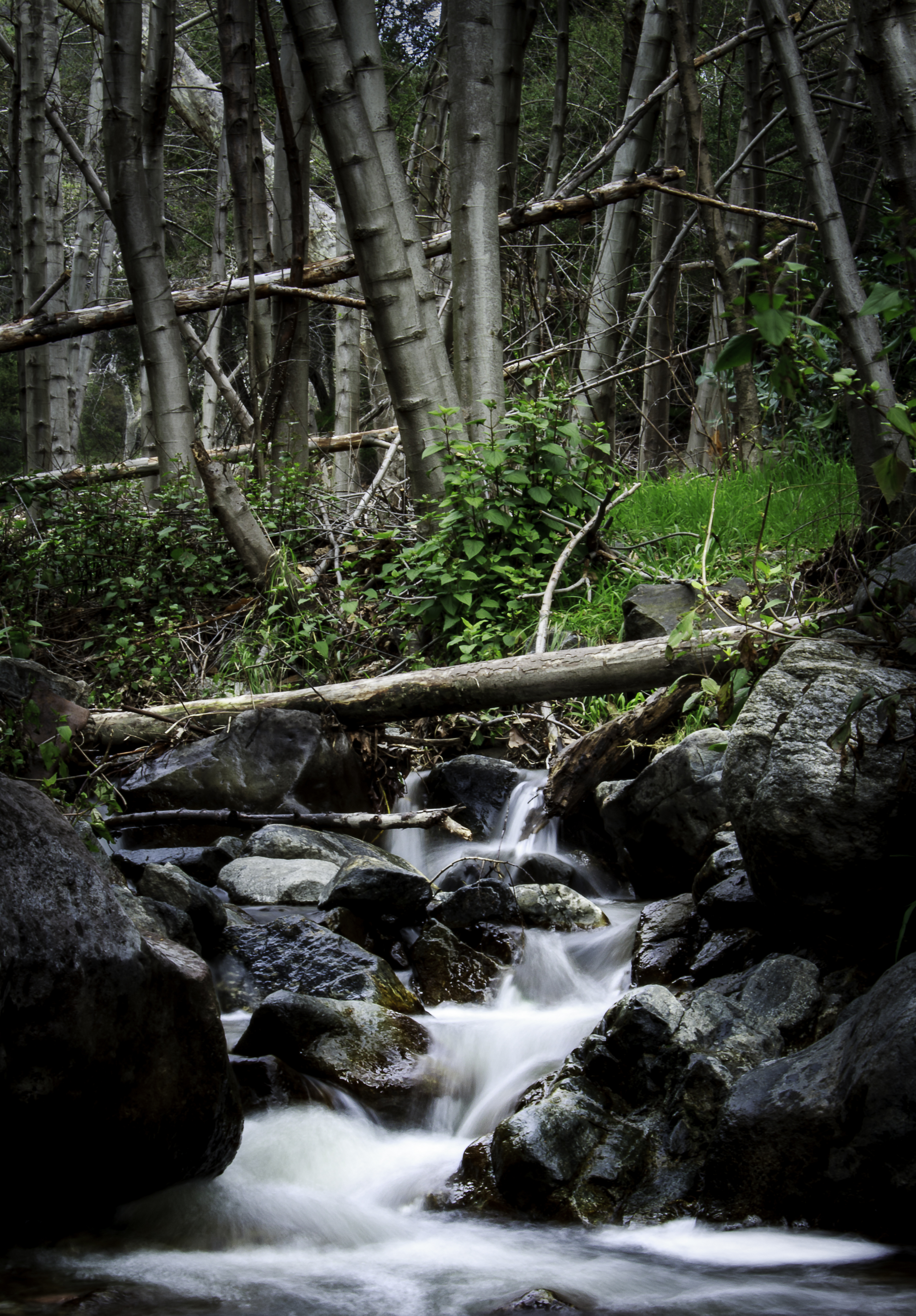 River cascading down boulders in a forest.
